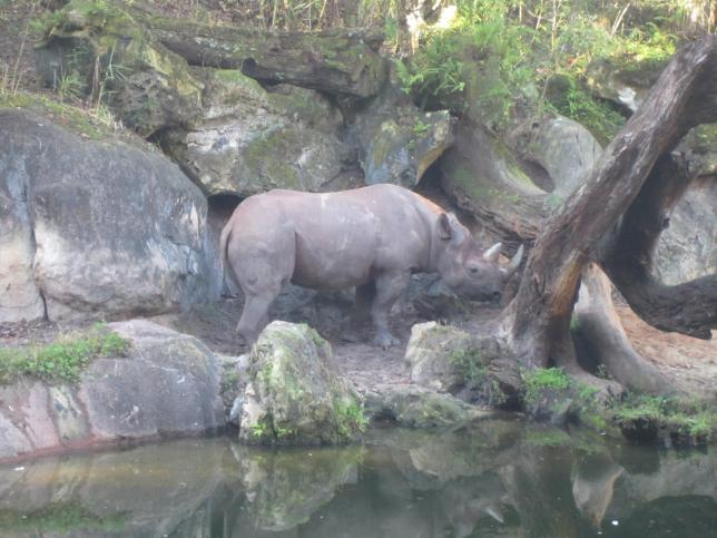 Like this rhino. He's chill.